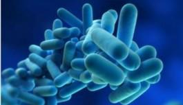 Legionella – contágio entre pessoas